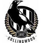 Collingwood Magpies Football Netball Colouring Afl Team