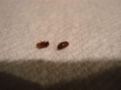 Small Black Bugs Inhouse  Home Decor Ideas