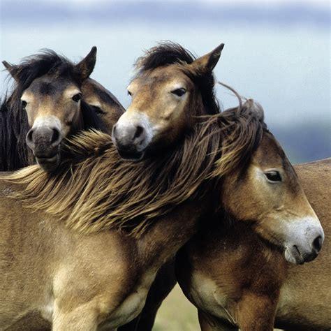 puzzles liebe pferde  teile ravensburger puzzle