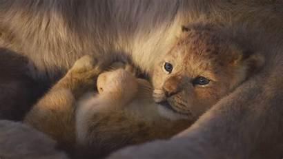 Lion King Simba Wallpapers Scenes Tv Spot
