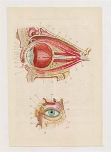 17 Best Images About Vintage Eye Illustration On Pinterest