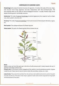 Cbse Class 11 Biology Chapter 5
