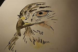 Red Tail Hawk Drawings…. | Sabicons