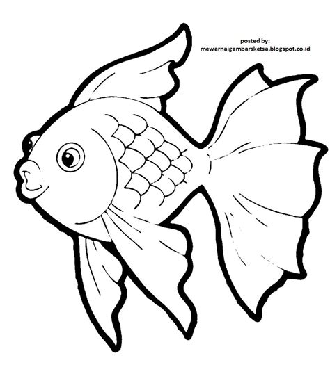 mewarnai gambar mewarnai gambar sketsa hewan ikan