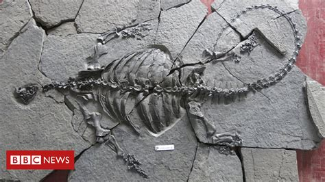 Ancient Fossil Turtle Had No Shell