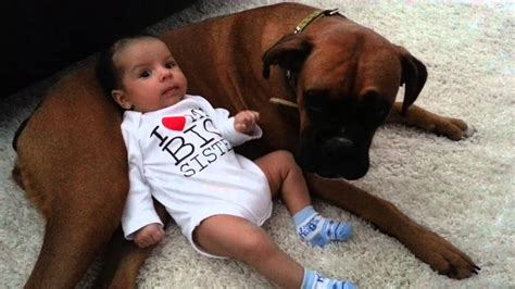 Cute Baby Uses Boxer Dog As Pillow