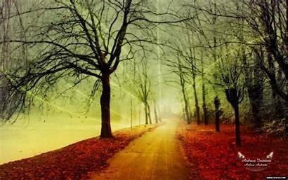 Beauty Natural Autumn Nature Rainy Season Winter