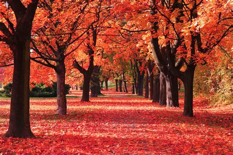 Fall Chrome Backgrounds by Autumn Leaves Hd Wallpapers New Tab Theme Impressive Nature