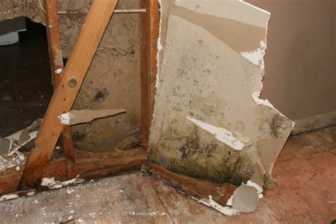 mold lead asbestos services norcal disaster