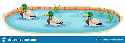 Pond Duck Ententeich Lokalisierter Ein Clipart