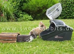 Kaninchenkäfig Für 2 Kaninchen : nobby 81059 transportbox f r kleine hunde und katzen nager elmo large 36 x 28 x 22 cm bunte ~ Frokenaadalensverden.com Haus und Dekorationen