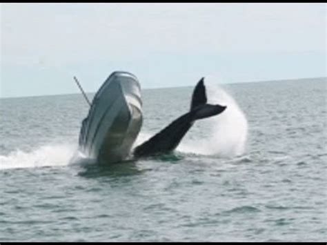 Video Of Fishing Boat Accident by Whale Collides With Fishing Boat 2013 Hq Youtube