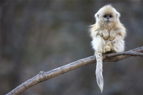 amazing wildlife photography gallery ebaums world