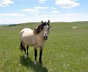 Spanish Mustang | Spanish Mustang | Pinterest | Mustangs ...