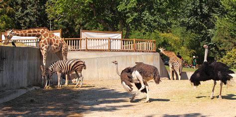 File:Madrid Zoo.jpg - Wikimedia Commons