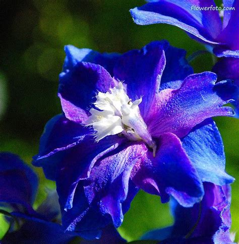 blue and white flowers names annual flower pictures and names blue exotic flowers flowers pinterest blue flowers