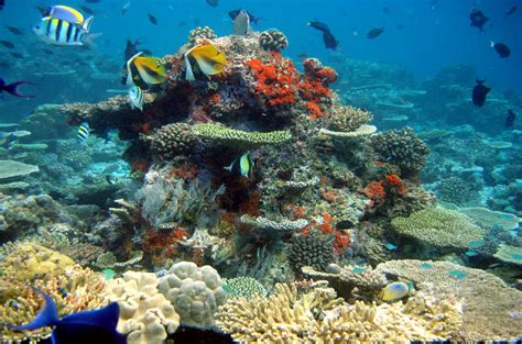 Best Place To Scuba Dive by Best Places For Scuba Diving Https Www