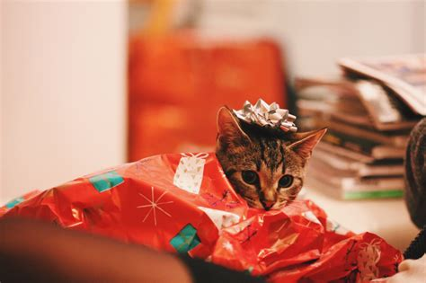 when did gift giving start guys here s the best gift giving guide for the you just started dating thought catalog