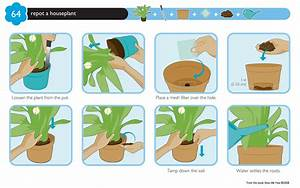 Graphical Instructions On How To Pot A Plant