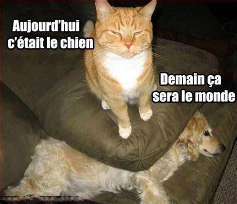 Meme Chat - meme chat chien tuer aujourdhui c etait le chien demain ce sera le monde image animated gif