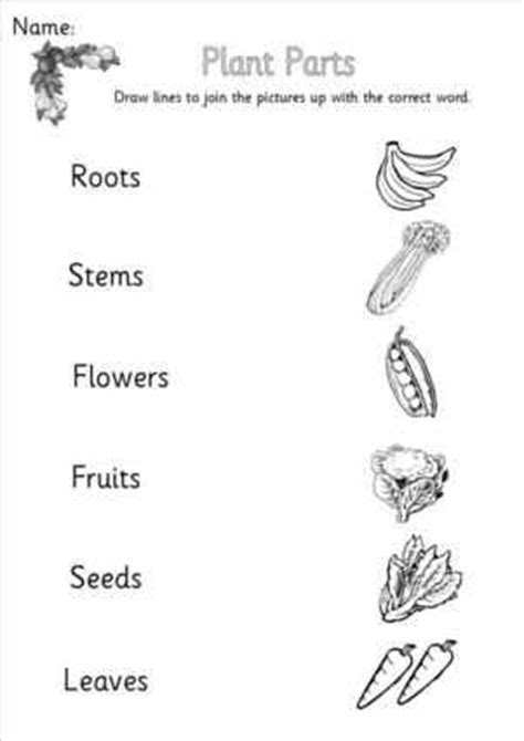 Floating And Sinking Powerpoint Ks1 by Plants Flowers And Seeds Eyfs Ks1 Sen Topic Resources