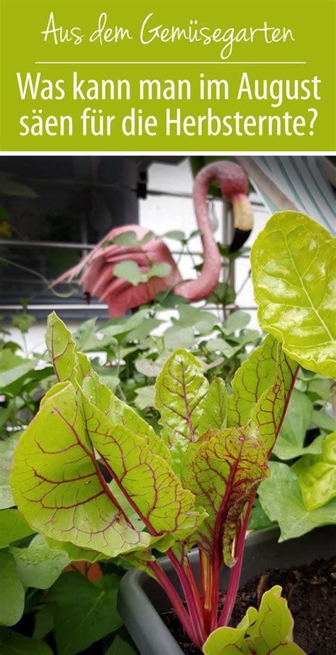 Garten Pflanzen August Gemüse by Welches Gem 252 Se Kann F 252 R Den Herbst Im August S 228 En