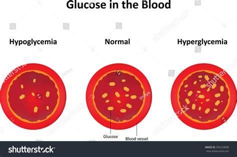 Blood Glucose Stock Vector 290229098 Shutterstock