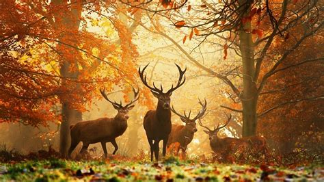 Wallpaper Nature Animals - deer nature animals grass trees leaves wallpapers hd