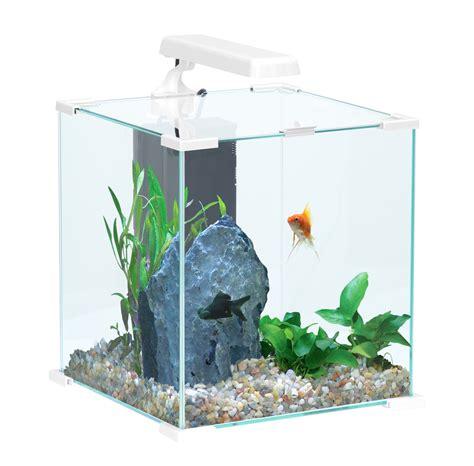 poisson pour nano aquarium 28 images hyphessobrycon amandae characid 233 s poissons