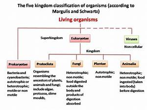 Explain the basis for grouping organisms into five ...