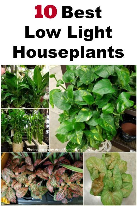 how to make house plants bushier