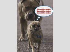 Postkarte Sprüche lustig Ganz natürlich bleiben Lustig