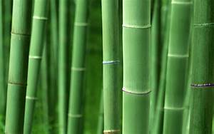 High Resolution Bamboo Plant Backgrounds