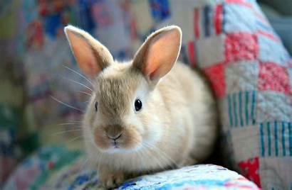 Rabbit Bunny Animal Wallpapers Background Computer Desktop