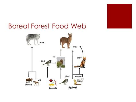 boreal cuisine forest food chain recipes food