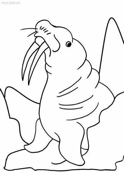 Coloring Pages Walrus Sheets Printable Template Cool2bkids