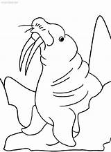 Coloring Walrus Pages Sheets Printable Toddler Cool2bkids Print Books Getcolorings Info sketch template