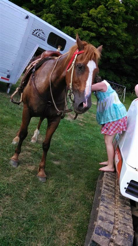 bad horse 4r ranch