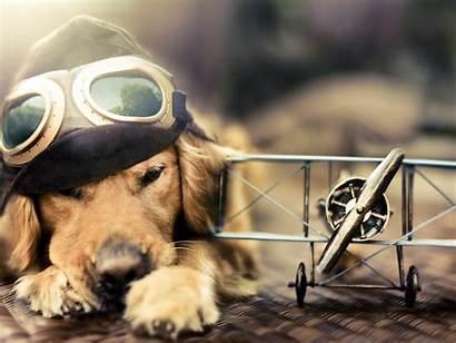 Funny Dog Wallpapers Cool Pixelstalk