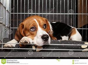 Dog In Cage Royalty Free Stock Photography - Image: 28074347