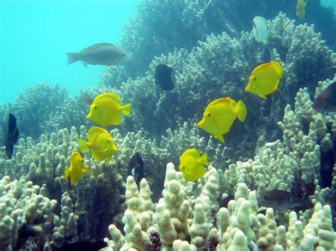 Hawaii's Coral Reef, Sacred Landscape of the Pacific Ocean - HawaiianCollectibleMenehuneDolls.com