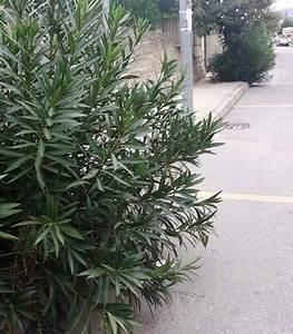 """Reggio Calabria: marciapiede """"occupato"""" dalle piante, pedoni costretti a camminare tra le auto"""