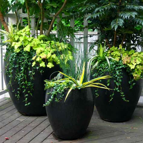 Container Gardening Services In Seattle  Seasonal Color