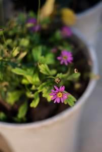 Garten Im Oktober : herbstbl ten im oktober garten ~ Lizthompson.info Haus und Dekorationen
