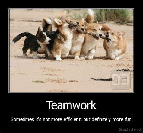 teamwork lustige tiere suesseste haustiere corgi hund