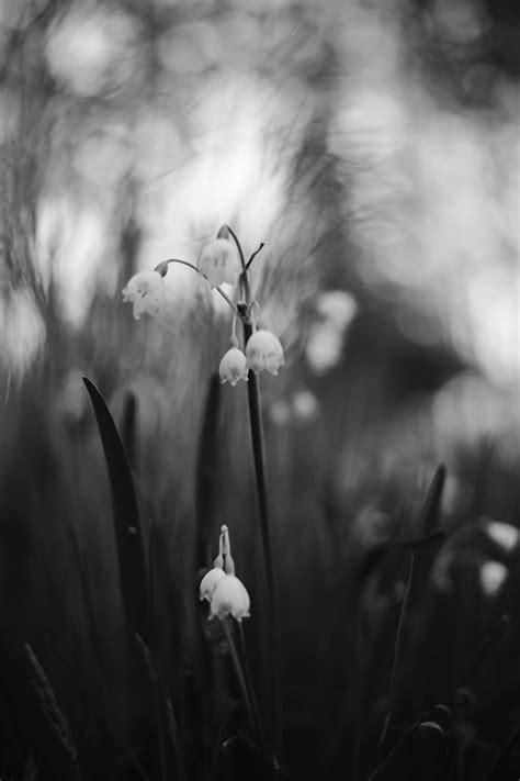 รูปภาพฟรี: ขาวดำ