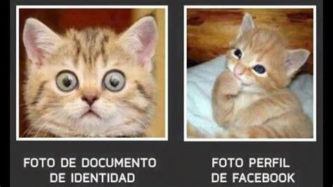 Memes De Gatos - lluvia de memes gatos youtube
