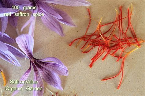 saffron spice stigmas best crocus sativus business