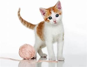 Was Brauchen Katzen : zecken entfernen bei katzen einfach und sicher ~ Lizthompson.info Haus und Dekorationen