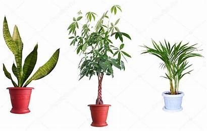 Plantas Ornamentales Zierpflanzen Ornamental Plants Fondo Piante
